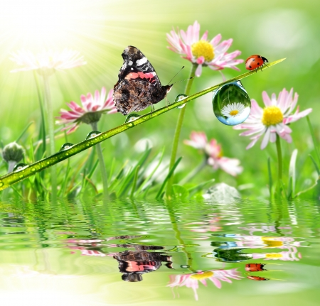fresh morning dew with ladybug and butterfly  photo