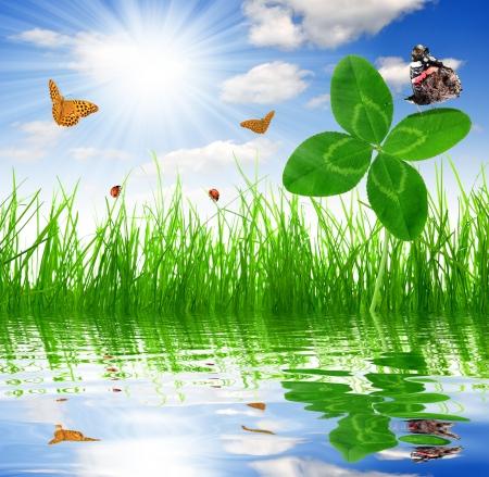quarterfoil: Clover quarterfoils with butterflies over a fresh spring grass  Stock Photo