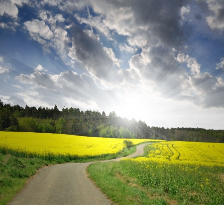 Spring landscape in the sunset 版權商用圖片