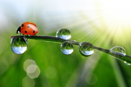 verse ochtenddauw en ladybird Stockfoto
