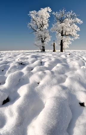 wintrily: Albero congelato Archivio Fotografico