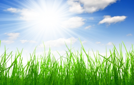 forecast: Fresh spring grass with blue sky