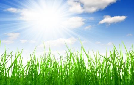 Primavera de la hierba fresca con el cielo azul