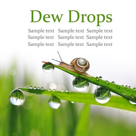 Snail on dewy grass photo