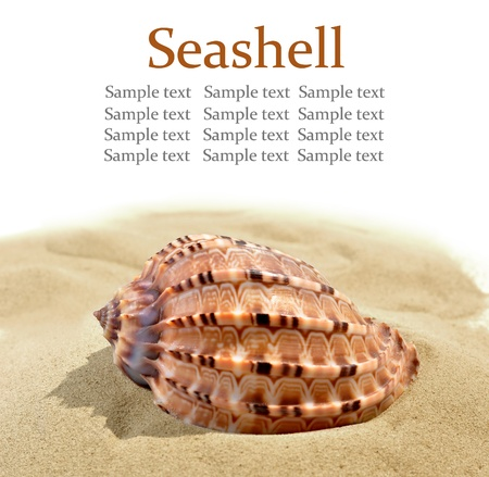 rare animals: shells on the sand  Stock Photo