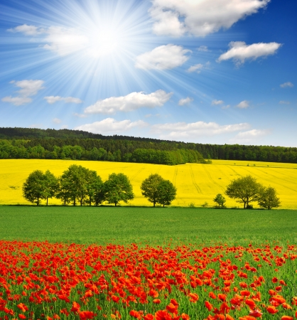 canola plant: spring landscape with red poppy field in the Czech Republic