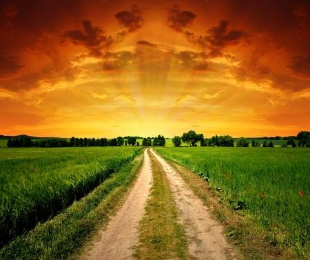 beauty farm: Way in field
