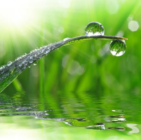 conservacion del agua: Hierba fresca con gotas de rocío de cerca