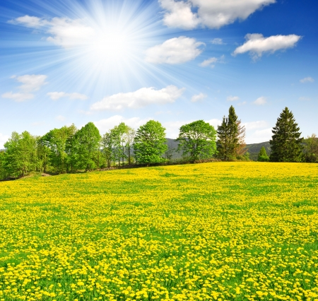 clearing: Spring landscape in the national park Sumava - Czech Republic