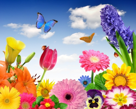 flora: floral background with butterfly