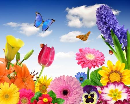 flowery: fondo floral con mariposas