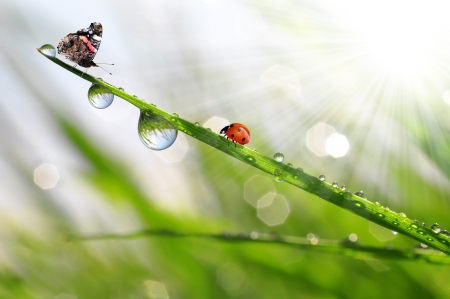 fresh morning dew with the butterfly and ladybird  photo