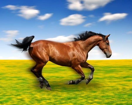 galloping: the running horse in the meadow  Stock Photo