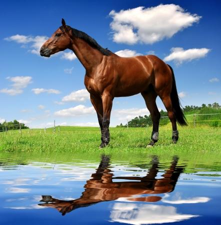carreras de caballos: caballo en el prado