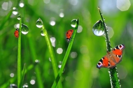kropla deszczu: świeże rano rosa i biedronka Zdjęcie Seryjne