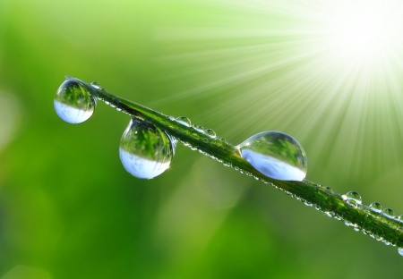 sun drop: drops of dew on a green grass  Stock Photo