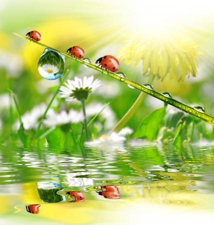 gotas de agua: fresco rocío de la mañana y mariquita