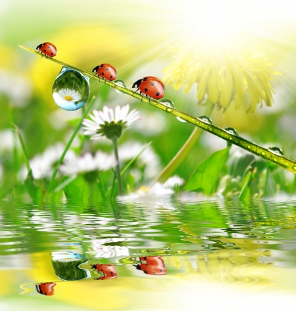 dews: fresh morning dew and ladybird  Stock Photo