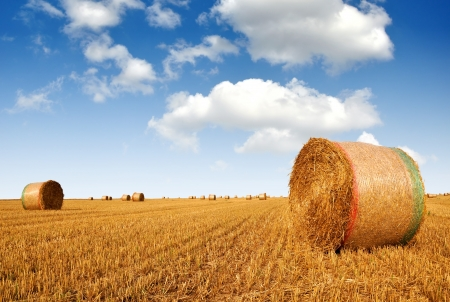 Straw bales on farmland with blue cloudy sky  photo
