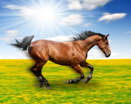 the running horse in the meadow  photo
