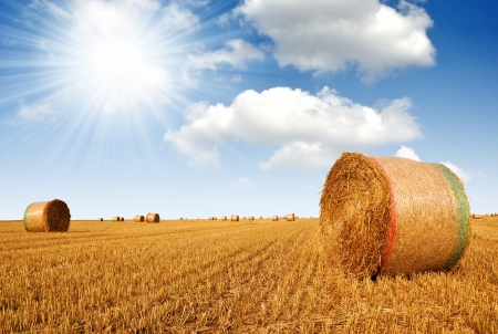 Straw bales on farmland  photo