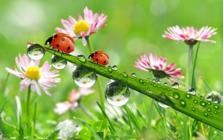 fresh morning dew and ladybird  版權商用圖片