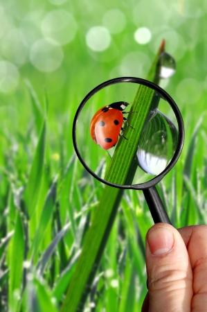 naturalist: naturalist