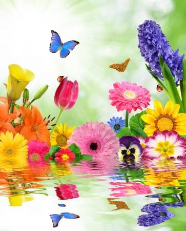 flowery: fondo floral con mariposa Foto de archivo