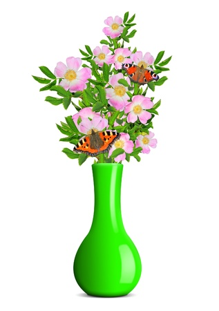 dog rose in the green vase isolated on white background Stock Photo