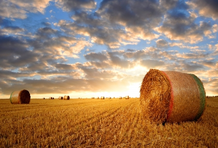 hay bales: Straw bales on farmland with sunset sky