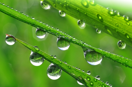 Fresh grass with dew drops close up  Stock Photo - 15149064