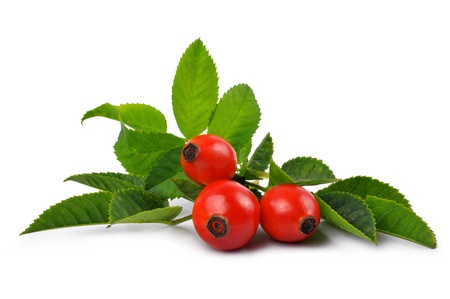 roses garden: Fresh rose hips with leaves on a white background