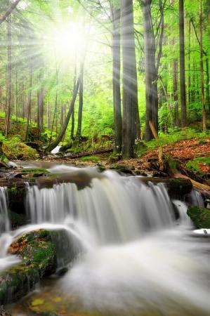 torrent: Waterfall in the national park Sumava-Czech Republic