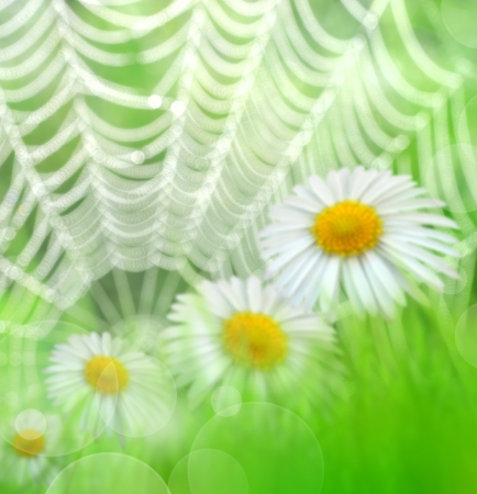 Natural green blurred background  photo