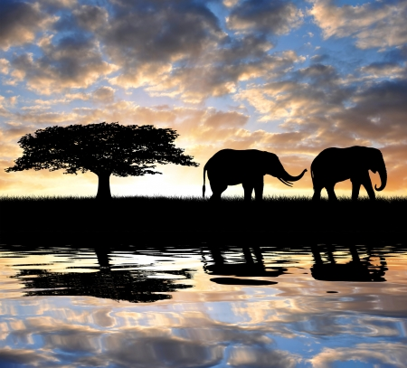 sunset lake: Silhouette elephants in the sunset