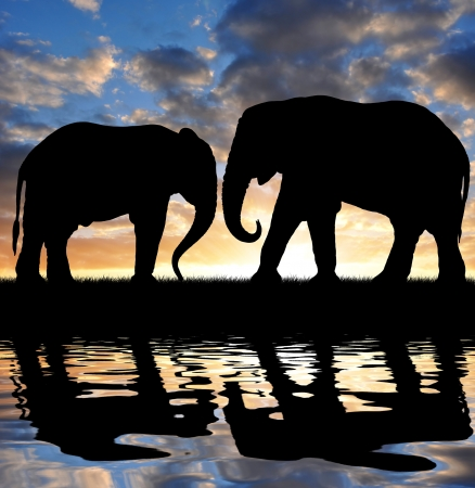 youngly: Silhouette elephants in the sunset