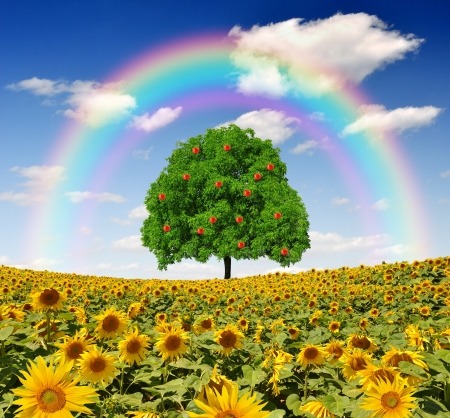 agribusiness: rainbow above the sunflower field with tree