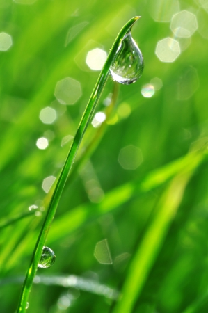 Fresh grass with dew drops close up photo