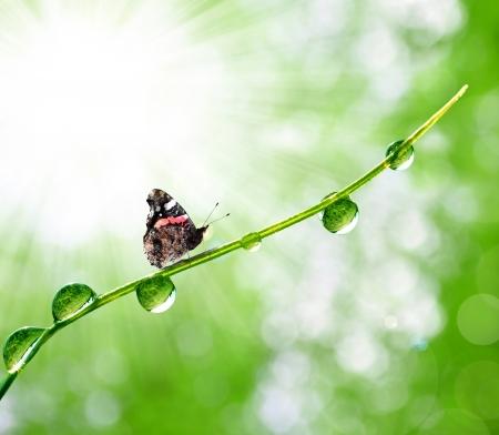 rocío fresco de la mañana y la mariposa