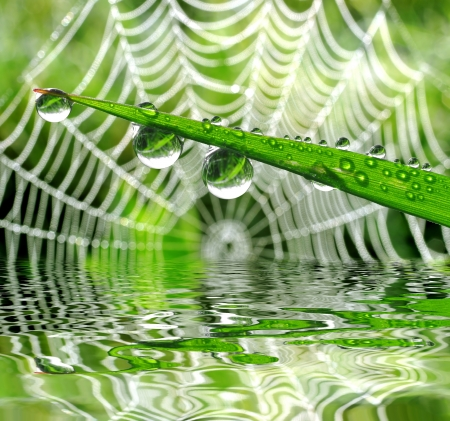 cobweb: Fresh grass with dew drops close up on the background spider web