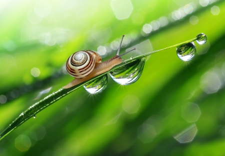 Lumaca su erba umida di rugiada
