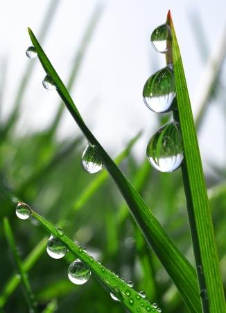 conservacion del agua: Hierba fresca con gotas de roc�o de cerca
