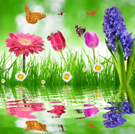floral background with butterfly photo
