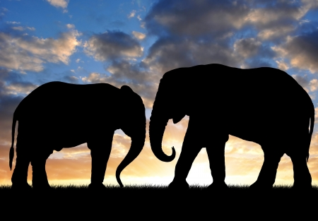 youngly: Silhouette two elephants in the sunset