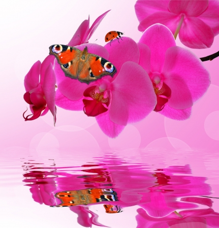 carpel: Purple orchid with butterfly - close up with shallow DOF  Stock Photo
