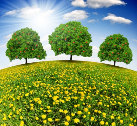 Apple trees on dandelions field  photo