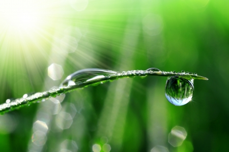 sunup: Fresh grass with dew drops close up
