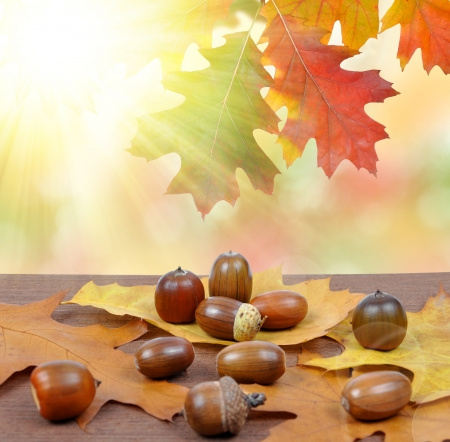 Autumn leaves with oak acorns and bokeh lights  photo