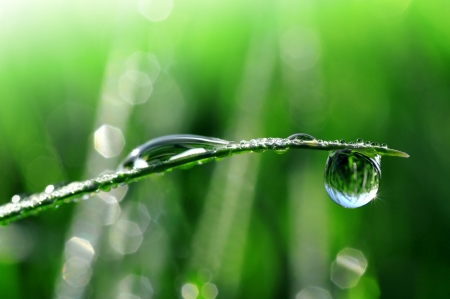 water conservation: Dew drops close up  Stock Photo