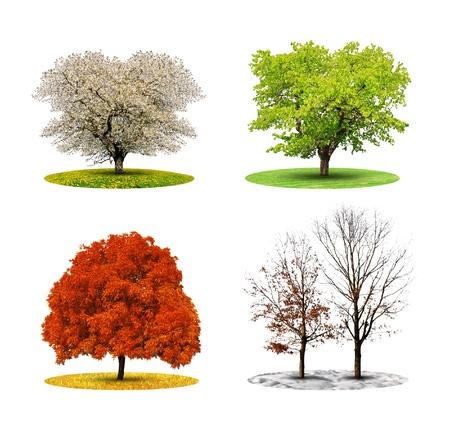 oxigeno: árboles en cuatro estaciones aisladas en blanco backgroud Foto de archivo